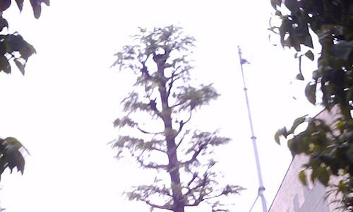 20170718_tree.jpg