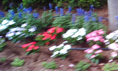 20170830_flower.jpg