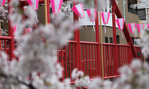 2017_meguro_river_sakura_05.jpg