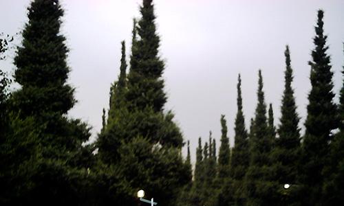 20190129_tree.jpg