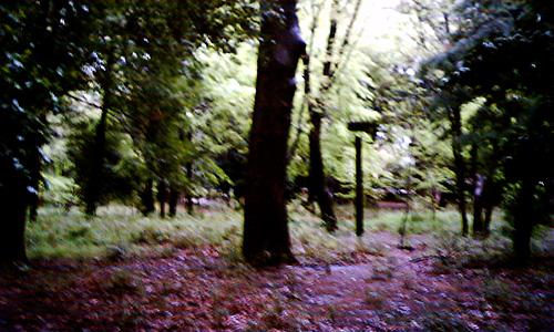 20190211_forest.jpg
