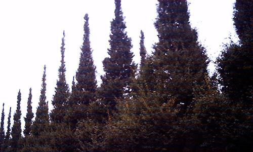 20190222_tree.jpg