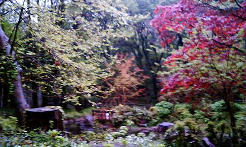20190301_forest.jpg