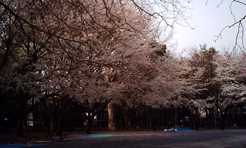 20190410_sakura.jpg