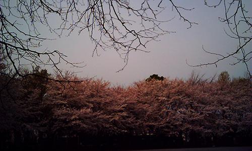 20190411_sakura.jpg