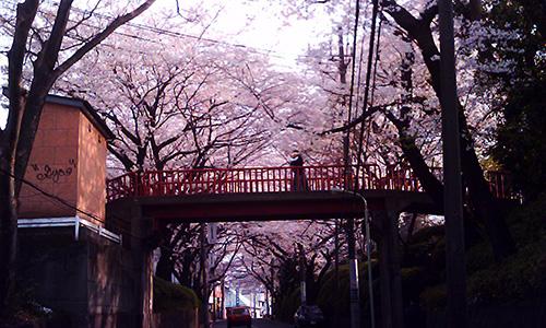 20190414_sakura.jpg
