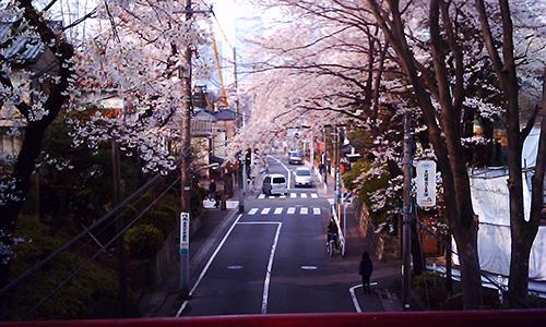 20190415_sakura.jpg