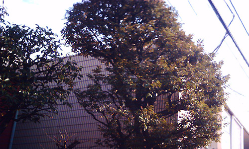 20190624_tree.jpg