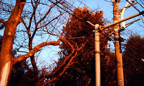 20190713_tree.jpg